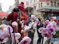 舊金山春節花市