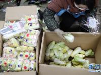 """特写:蔬菜批发市场里感受""""春""""意"""
