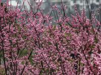春雨春色春意浓