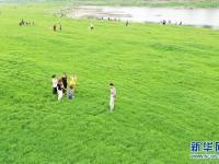 重庆:长江水位回落现草海
