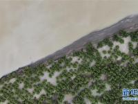 雅江沿岸绿意浓