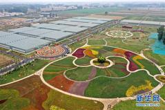 河南开封:现代农业产业园里庆丰收