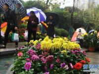 重庆市第24届菊花艺术展拉开帷幕