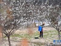福州:花开乡间春意盎然