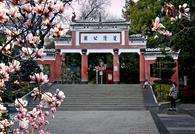 邵阳双清公园春暖玉兰花盛开 恰是春游赏花拍花最佳时
