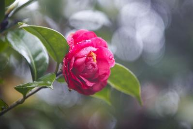 春雨催绿万物苏