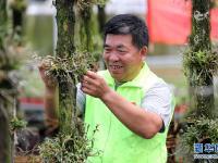 安徽全椒:铁皮石斛产业助力乡村振兴