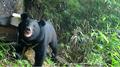 南山國家(jia)公園首次拍到黑熊